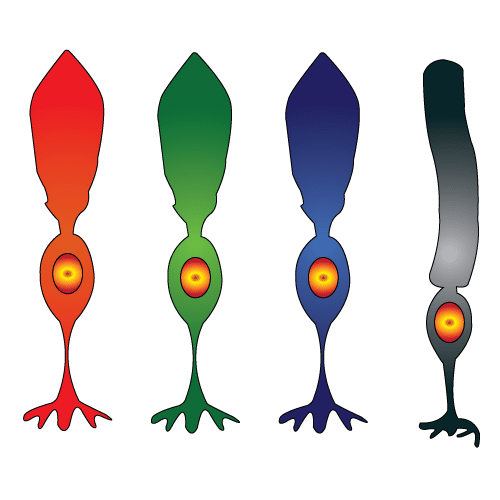 conuri culori